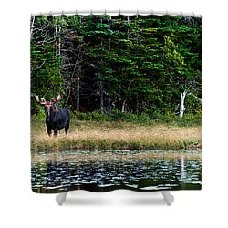 Moose Shower Curtain by Ulrich Schade