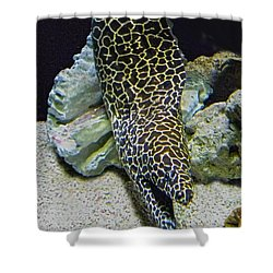 Moray Eel Shower Curtain by Sandi OReilly