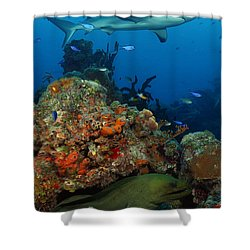 Moray Reef Shower Curtain by Carey Chen