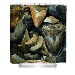 More Megalodon Teeth Shower Curtain by Rebecca Sherman