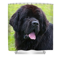 Morgan The Newf Shower Curtain