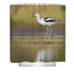 Shower Curtain featuring the photograph Morning Avocet by Bryan Keil