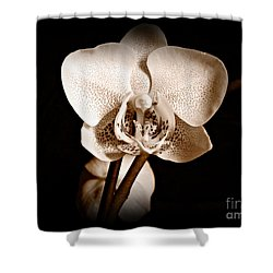 Morning Beauty Sepia Shower Curtain