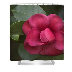Morning Camellia Shower Curtain by Penny Lisowski