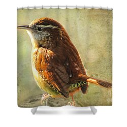Morning Carolina Wren Shower Curtain