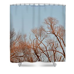 Morning Coloured In Fall Shower Curtain by Sonali Gangane