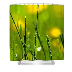 Morning Dew Shower Curtain