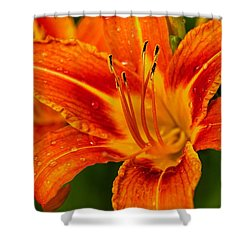 Shower Curtain featuring the photograph Morning Dew by Dave Files