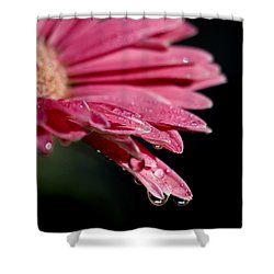 Shower Curtain featuring the photograph Morning Dew by Joe Schofield