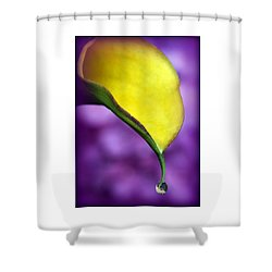Morning Dew Shower Curtain by Karen Wiles