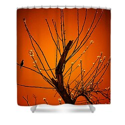 Morning Dove Sunrise Shower Curtain