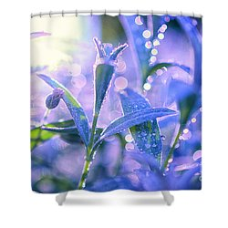 Morning Field Shower Curtain by Sabine Jacobs