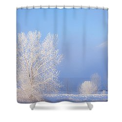 Morning Frost Shower Curtain by Darren  White