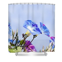 Morning Glory Flowers Shower Curtain