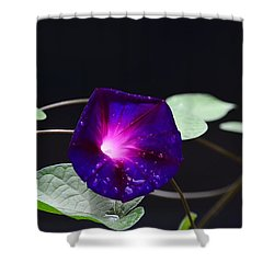 Morning Glory - Grandpa Ott's Shower Curtain
