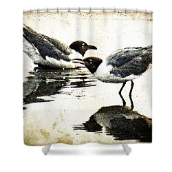 Morning Gulls - Seagull Art By Sharon Cummings Shower Curtain