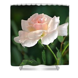 Morning Has Broken Shower Curtain
