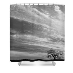 Morning Has Broken Three Trees Bw Shower Curtain by James BO  Insogna