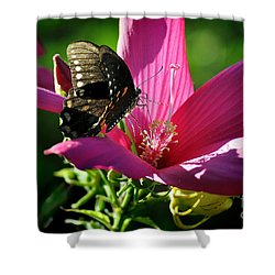 Shower Curtain featuring the photograph In The Morning by Nava Thompson