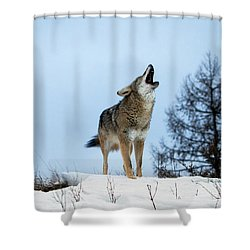 Shower Curtain featuring the photograph Morning Howl by Jack Bell