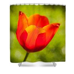 Morning Joy Shower Curtain by Davorin Mance