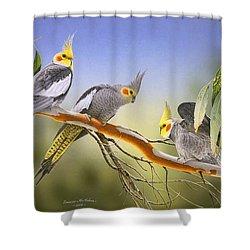 Morning Light - Cockatiels Shower Curtain