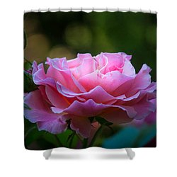 Shower Curtain featuring the photograph Morning Light by Patricia Babbitt