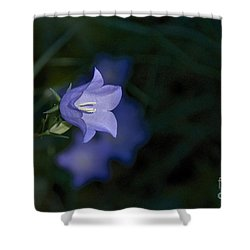 Morning Light Shower Curtain by Sean Griffin