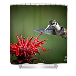 Morning Meal Shower Curtain by Cheryl Baxter