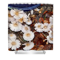 Morning Mushrooms Shower Curtain