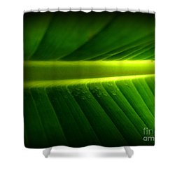 Morning Rain Droplets Shower Curtain