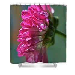 Morning Shower Shower Curtain by Michelle Meenawong
