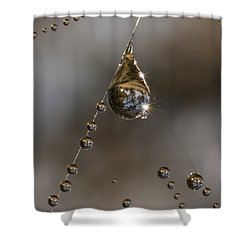 Morning Spider Web Dew Shower Curtain