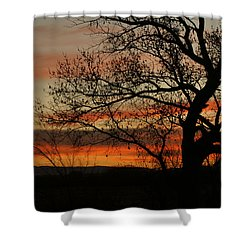 Morning View In Bosque Shower Curtain by James Gay