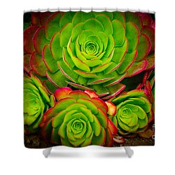 Morro Bay Echeveria Shower Curtain