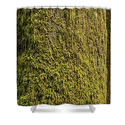 Moss Covered Tree Olympic National Park Shower Curtain by Steve Gadomski