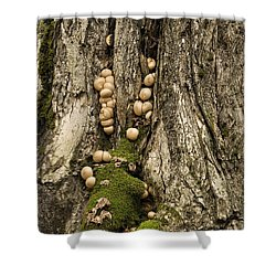 Shower Curtain featuring the photograph Moss-shrooms On A Tree by Carol Lynn Coronios