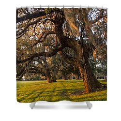 Mossy Trees At Sunset Shower Curtain by Debra and Dave Vanderlaan