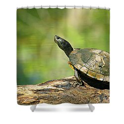 Mossy Turtle Shower Curtain