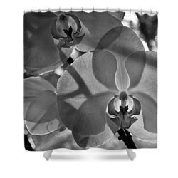 Shower Curtain featuring the photograph Moth Orchid Backlit by Ron White