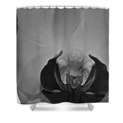 Shower Curtain featuring the photograph Moth Orchid Bw by Ron White