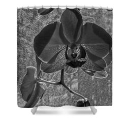 Shower Curtain featuring the photograph Moth Orchid In Window by Ron White
