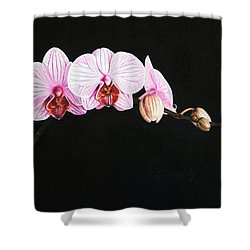 Moth Orchid Shower Curtain by Marna Edwards Flavell