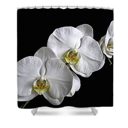 Moth Orchid Trio Shower Curtain