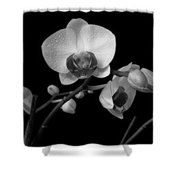 Shower Curtain featuring the photograph Moth Orchids by Ron White