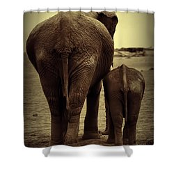 Mother And Baby Elephant In Black And White Shower Curtain by Amanda Stadther