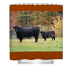 Shower Curtain featuring the photograph Highland Cattle  by Eunice Miller