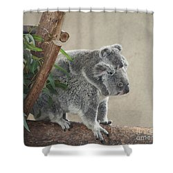 Shower Curtain featuring the photograph Mother And Child Koalas by John Telfer