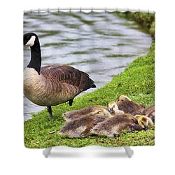 Mother With Goslings Shower Curtain by Jason Politte