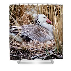 Mother's Day Goose Shower Curtain
